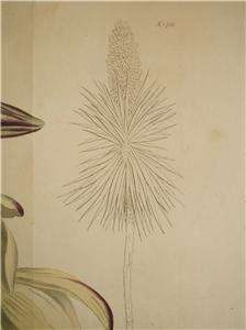 LARGE CURTIS H/C COPPERPLATE BOTANICAL YUCCA 1815